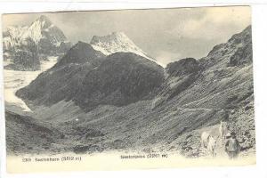 Susternhorn & Sustenpass , Switzerland, 1900-10s ; Man leads goats on trail