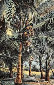Philippines Coconut Tree Boat