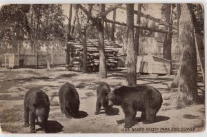 Bears, Ciry Zoo, Denver CO