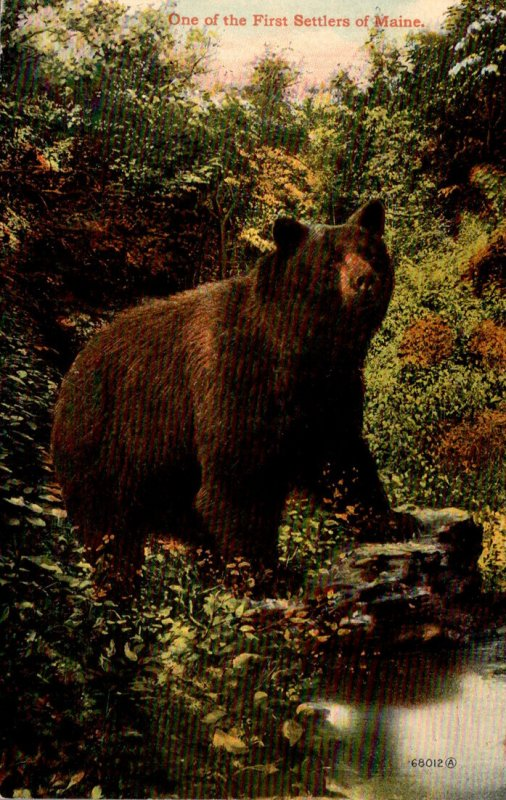 Brown Bear One Of The First Settlers Of Maine