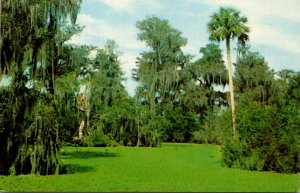 Florida Immokalee Corkscrew Swamp Sanctuary Lettuce Lake