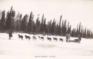 RP: WHITE HORSE, Yukon Territory, Canada, 20-30s; Dog Team