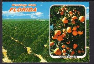 Greetings From Florida Oranges BIN