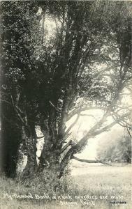 1930s Myrtlewood Burhl Oregon Coast RPPC Real photo postcard 8755 Patterson