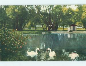 Divided-Back SWAN BIRDS AT SOLDIERS HOME Back Says Milwaukee Wisconsin WI HM5858