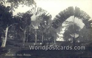 Malaysia, Malaya  Travellers' Palm Real Photo