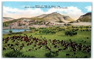 Mid-1900s White Faced Herefords, Round-Up Time in Texas Postcard