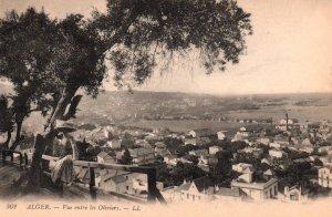 Vue Entr Les Oliviers,Alger,Algeria