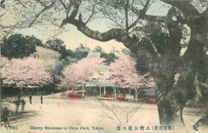 Cherry Blossoms Ueno Park Tokyo C-1910 Postcard hand colored 868 Japan