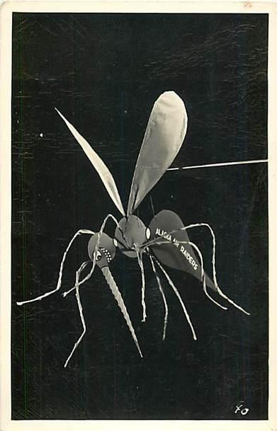 RPPC of Alaska Air Raiders Mosquito
