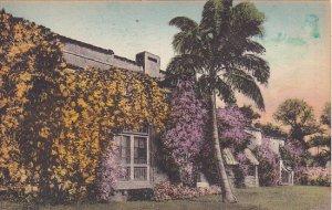 Bignonia and Bougainvillea In Bloom In Florida Albertype