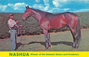 Belmont Park & Preakness Winner Nashua Race Horse Postcard