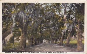 Louisiana New Orleans Avenue Of Mammoth Oaks Audubon Park 1927