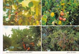 Cayman Islands Some of The Local Tropical Fruits 1991