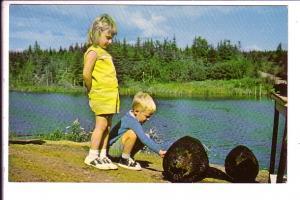 Trained Beaver, Children, Mrs Mickelburgh, Grave Hill Road, Barnesville, New...