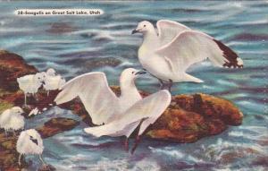 Seagulls On Great Salt Lake Utah