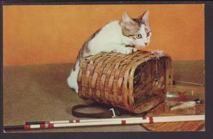 Cat on a Basket Postcard