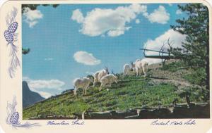 Mountain Goat, Rocky Mountains, Banff, Alberta, Canada, 40-60s