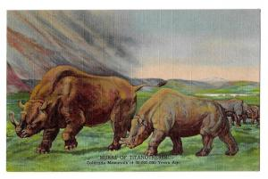 Colorad Museum Natural History Titanotheres Mural Postcard