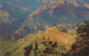 Arizona Grand Canyon Cedar Trees Along The South Rim