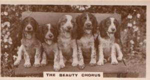 Dog Dogs The Beauty Chorus Singing Old Real Photo Cigarette Card