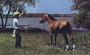 Texas Cowboy & his Horse Western Cowboy, Cowgirl Postcard Postcards  Texas Co...