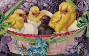 EASTER, 1900-10s; Three yellow  & one black chick in a basket, egg shells, Fo...