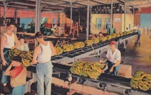Unloading Banans From Ship Side New Orleans Louisiana