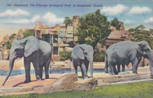 Illinois Chicago Zoological Park At Brookfield Elephants Curteich