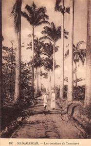 Africa Madagascar Les cocotiers de Tamatave