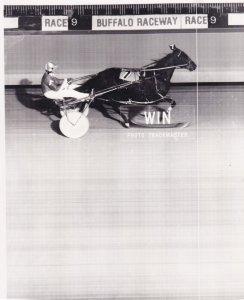 RP; BUFFALO, New York, Mar Jim Dandy Wins Sixth Straight, BUFFALO RACEWAY, Ha...