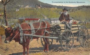 Kentucky Mountains Transportation~Old Man on Ox Cart Hauling Wood~1908 Postcard