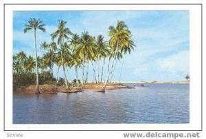Palm Trees On Bedok Beach, Singapore, 40-60s