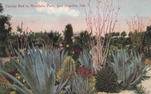 LOS ANGELES, California, 1900-10s; Cactus Bed in Westlake Park