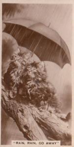 Cat Cats Rainy Day Under Umbrella German Real Photo Cigarette Card