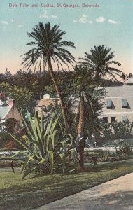 Date Palm & Cactus , ST. GEORGES , Bermuda , 1930s