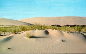 North Carolina Outer Banks Sand Dunes