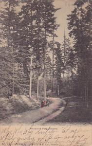 Woodland Park Seattle Washington 1906