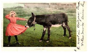 A Hungary jack, Donkey eating girl's dress