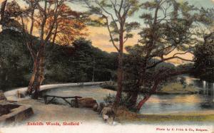 Endeliffe Woods Sheffield River Promenade Postcard