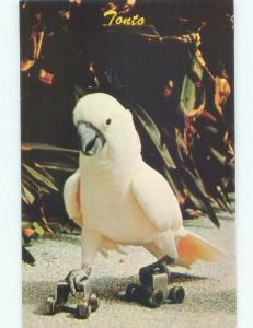 Pre-1980 PARROT JUNGLE - COCKATOO BIRD ON ROLLERSKATES Miami Florida FL E6001-22