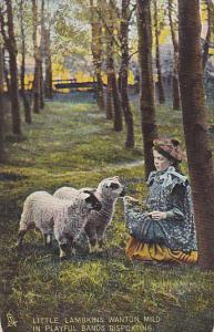 Tucks Animal Studies Girl With Sheep