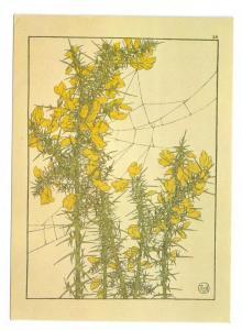 J. Foord Gorse Art Nouveau Botanical Flower 4X6 Postcard