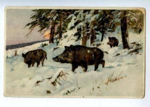 156572 Winter SUN Hunt WILD BOAR Vintage Color PC