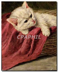 Old Postcard Cat Cats Kitten