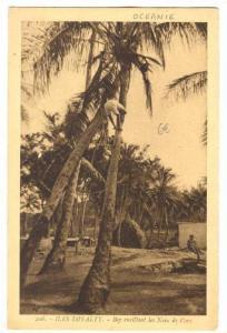 Loyalty Islands, New Caledonia , 00-10s ; Boy cueillant les Noix de Coco
