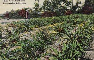 California Pineapple Field Near Los Angeles
