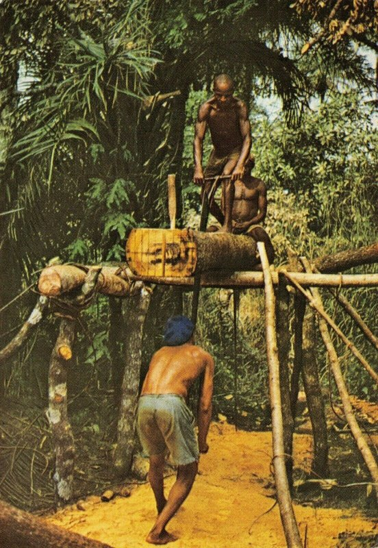 Vintage Postcard, Cutting Timber, Sierra Leone, Africa 78W