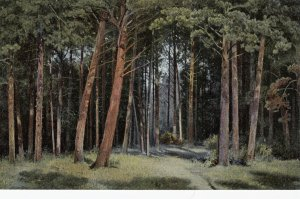 Schischkine , Russia, 00-10s ; Bois de sapins