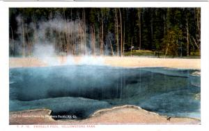 BLOOM, YP16, Emerald Pool, Yellowstone National Park
